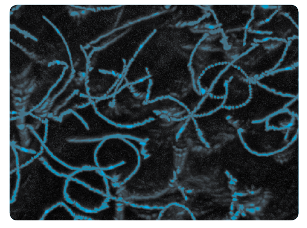 The image shows the track of swimming Escherichia coli using dark field microscopy. Such images provide detailed data on the swimming behavior of microorganisms such as, swimming speeds, tumble frequency, and turn angles.