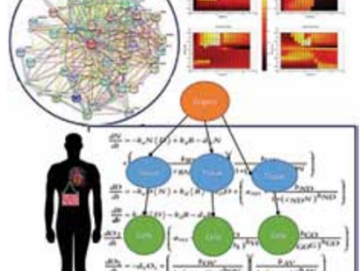 Bio_Dynamic modeling of wholebody metabolism